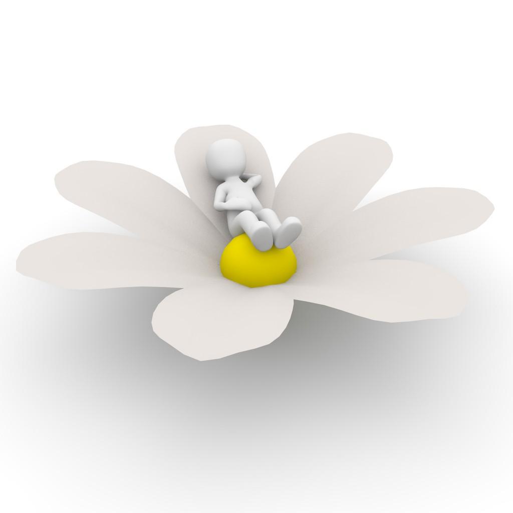 flower-1013722_1920
