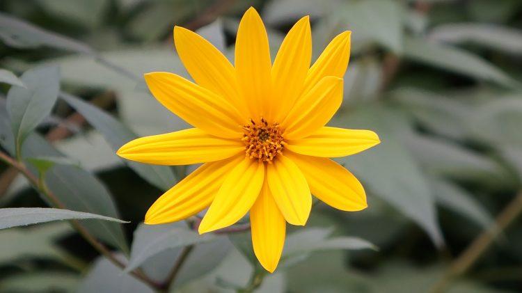 flower-1152908_1920